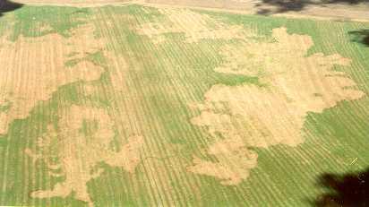 crop_damage